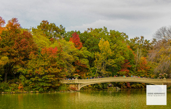 Bow Bridge View, Central Park, Autumn Fall Colors, New York City