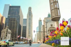 Chicago Urban Street, Tulip Flowers - Magnificent Mile