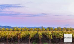 Napa Valley, Fall Foliage, Autumn Colors, Seasons Change