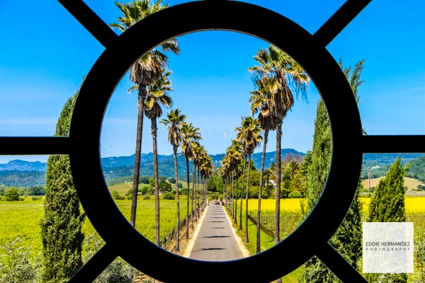 Napa Valley, Scenic Views, Palm Trees, Spring Mustard Bloom