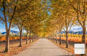 Fall Foliage, Autumn Colors, Seasons Change
